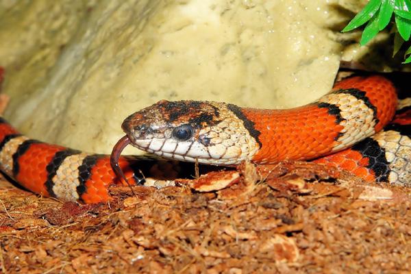 تفسير حلم الحية في المنام الثعابين والافاعي