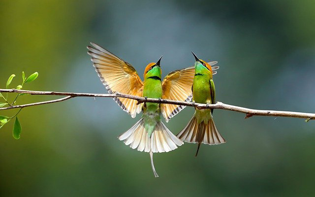 تفسير حلم الطير في المنام