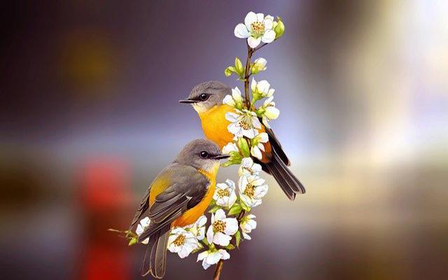 تفسير رؤية الطيور الملونة في المنام